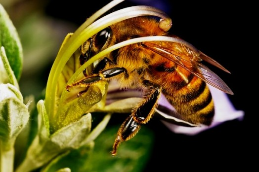 Life cycle of a honey bee - raising bees for honey (2)