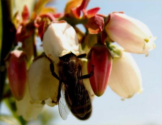 Abeilles solitaires - maison des abeilles solitaires (3)