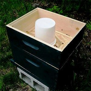 Bees feeders - bees feeding (2)