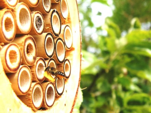 Bee house - bee hotels (12)