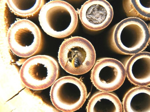 Bee house - bee hotels (11)