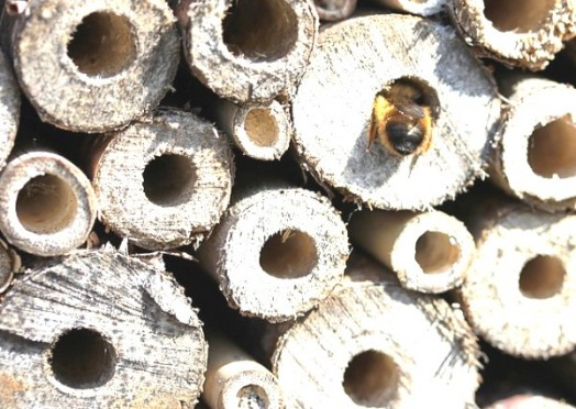 Bee house - bee hotels (3)