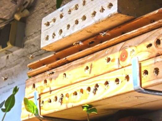 Bee house - bee hotels (22)
