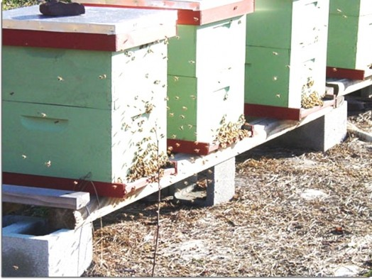 How to start a bee hive - starting bee hives (1)