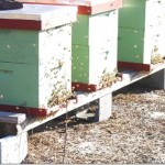 How to start a bee hive