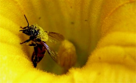 Bee pollen and honey - honey bee pollen benefits (1)