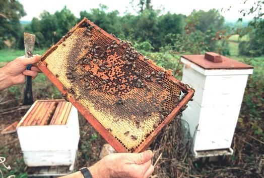 Bees apiary - honey apiary (1)