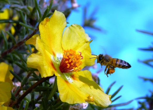 Wildflower honey - benefit of raw honey (1)