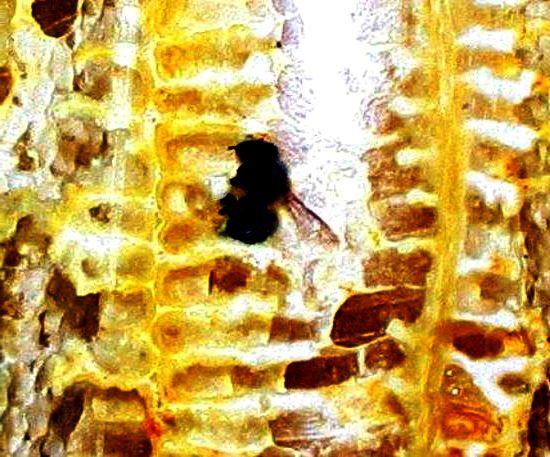 Bee makes honey1
