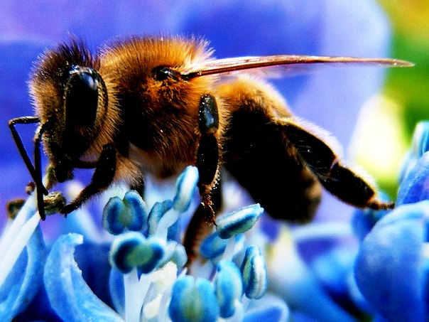 Bee makes honey2