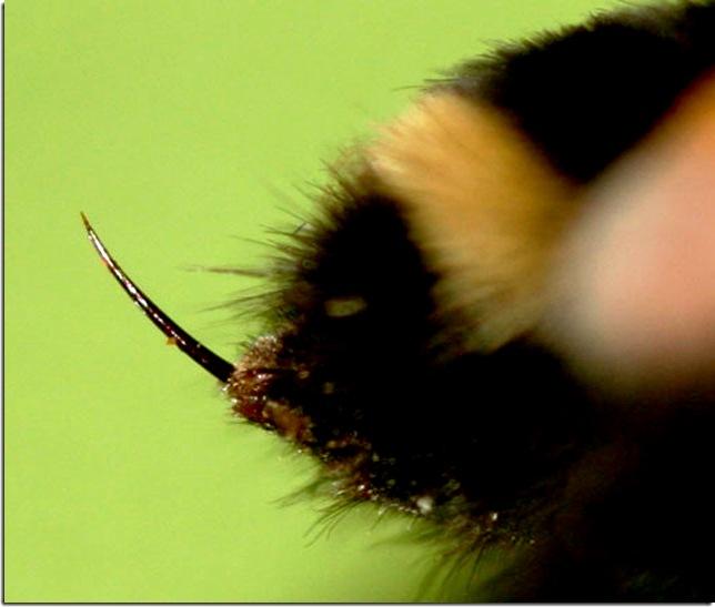 Honey bee facts2