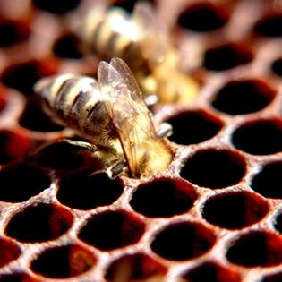 Manuka honey cancer - manuka honey reviews