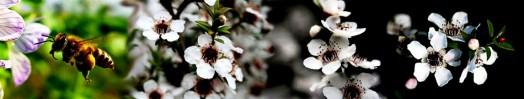Manuka honey eczema (3)