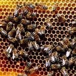 honey extracting equipment