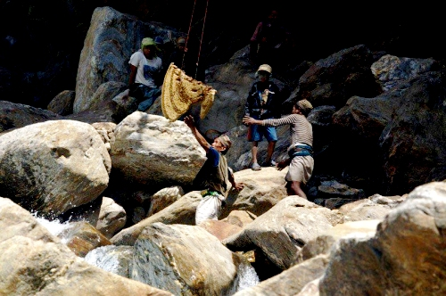 Extraction du miel - Photos de la montagne de l'Himalaya (17)
