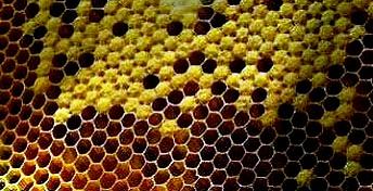 Bee farming1
