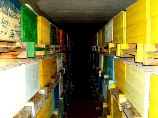 Bee farming (3)