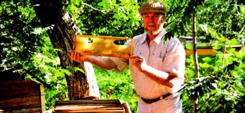 Bee farming (4)