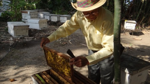 Bees in Thailand (3)