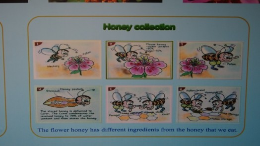 Bees in Thailand (10)
