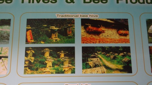 Bees in Thailand (4)