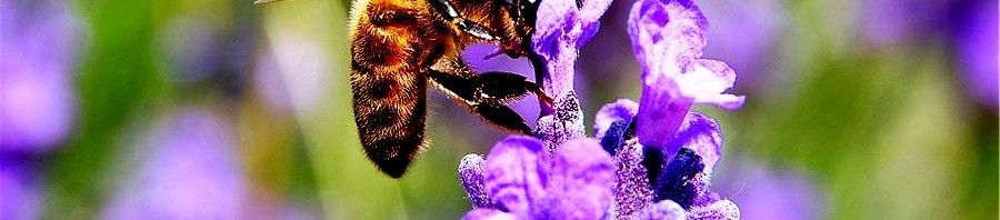 Plants for bees1