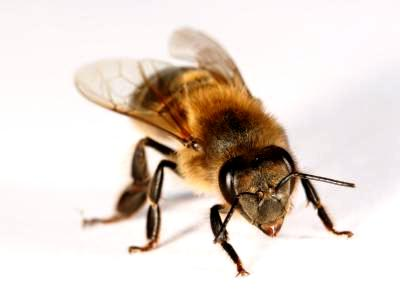 What is bee in South Africa (1)