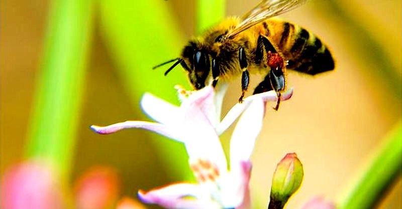 Worker bee2