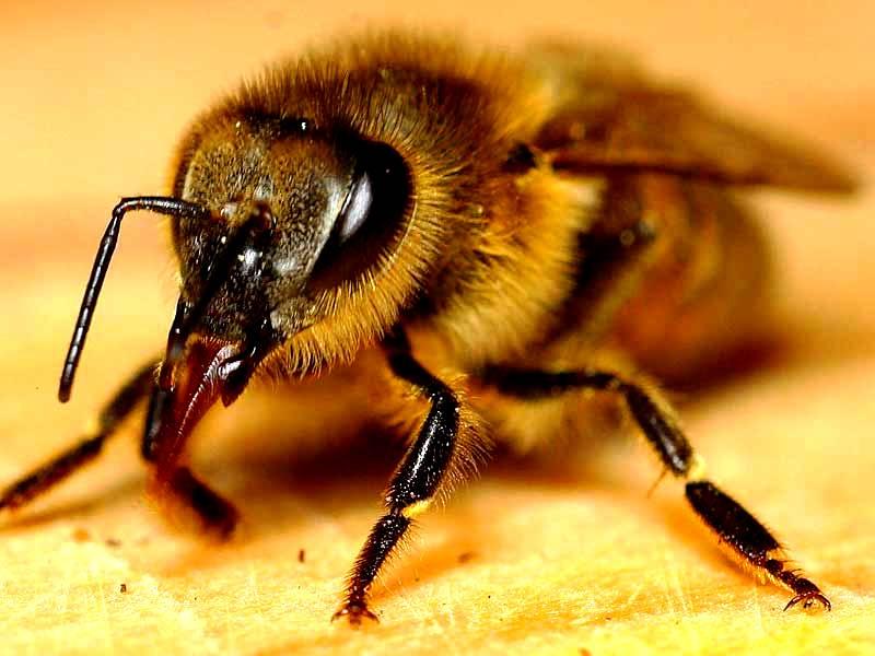 Worker bee3