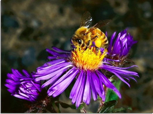 Bee facts (1)