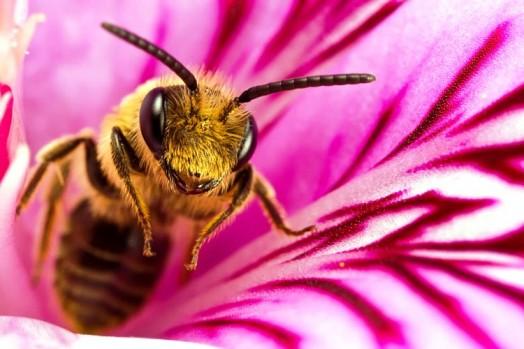 Les faits sur les abeilles (2)