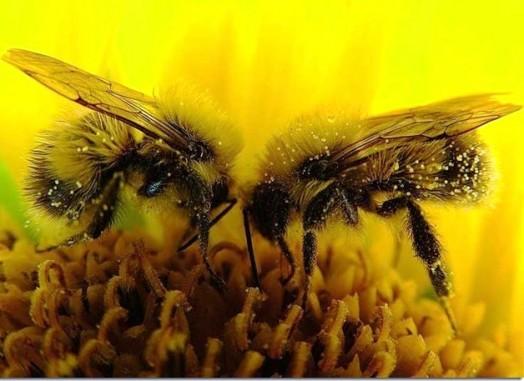 Les faits sur les abeilles (4)