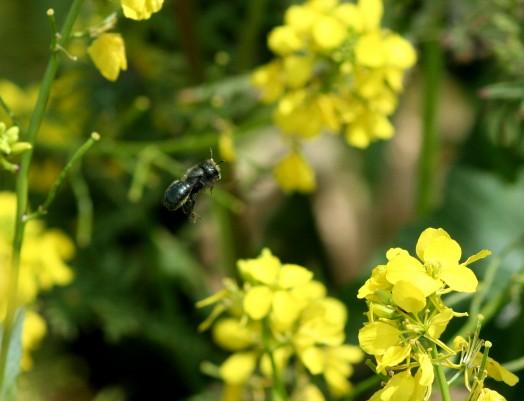 Blue bee (2)