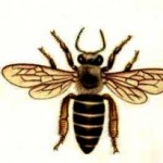 Species of bees