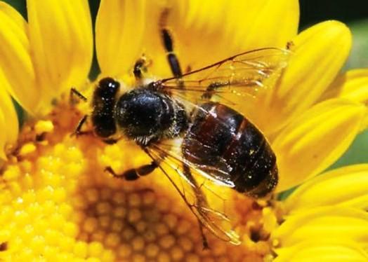 Les faits sur les abeilles (6)