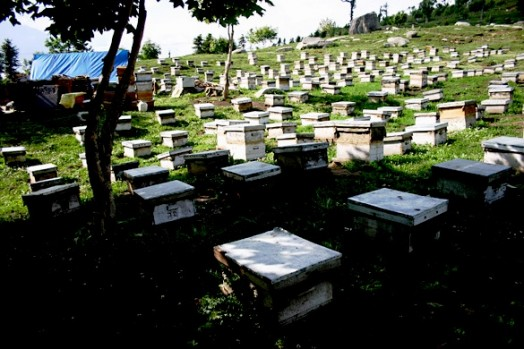 Bee India (1)