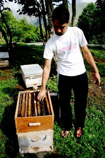 Bee India (3)