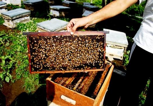 Bee India (4)