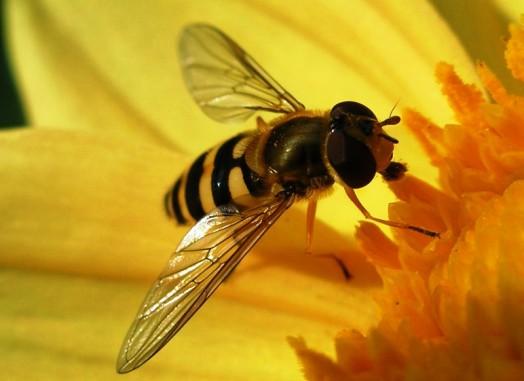 Black bees (3)