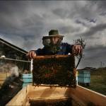 Keeping bee hives