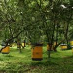 Honey bee farms
