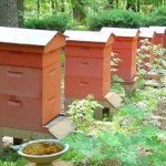 Making bee hives