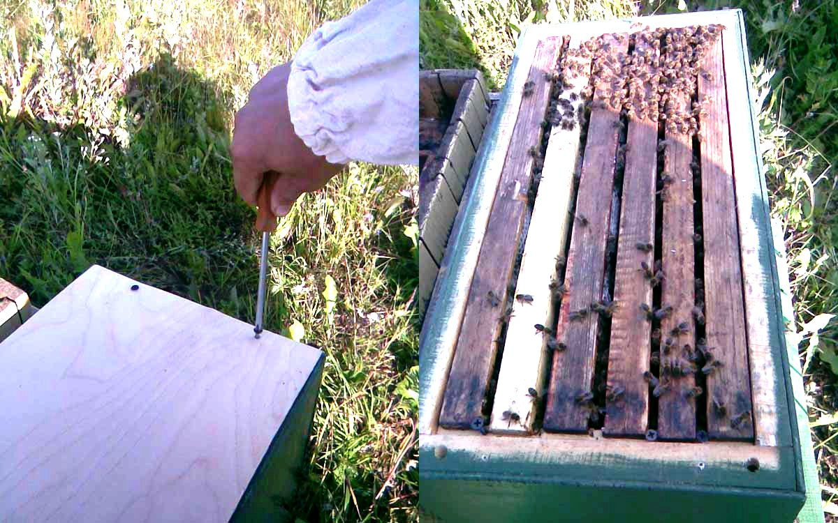 Bee catchers - how to make a bee trap