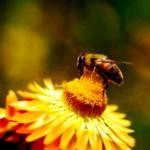 Bee makes honey