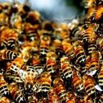 Bee problems
